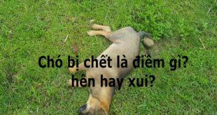 cho-bi-chet-la-diem-gi