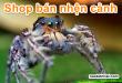 shop-ban-nhen-canh-tphcm