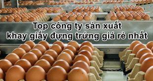 xuong-san-xuat-khay-giay-dung-trung4