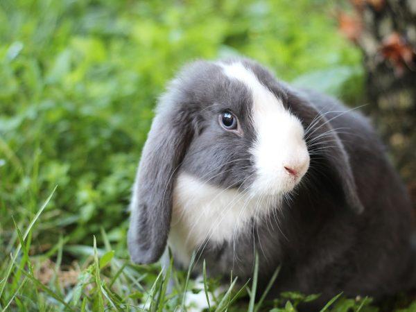 Shop bán thỏ cảnh, kiểng, thú cưng tại TpHCM uy tín nhất