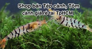 shop-ban-tep-canh-tom-canh-gia-re-tai-tphcm