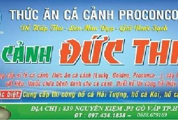 shop-ban-ca-axolotl-tphcm-1