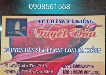 shop-ban-ca-axolotl-tphcm-3